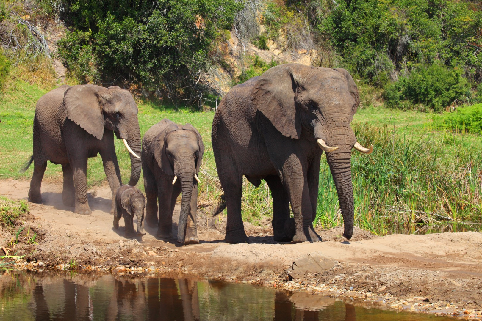 Elephant family at botlierskop